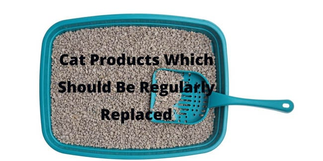 Cat products which should be regularly replaced