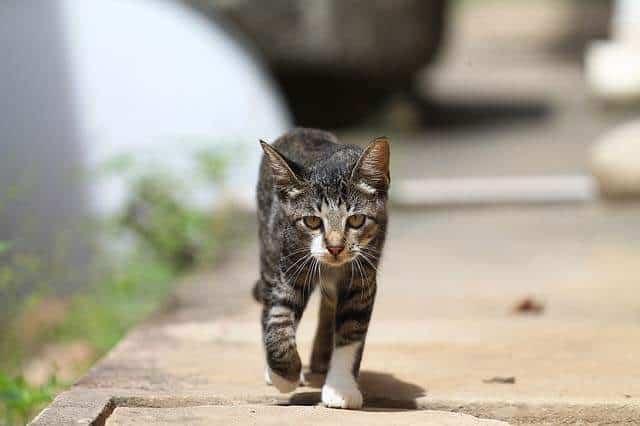 Cat following human