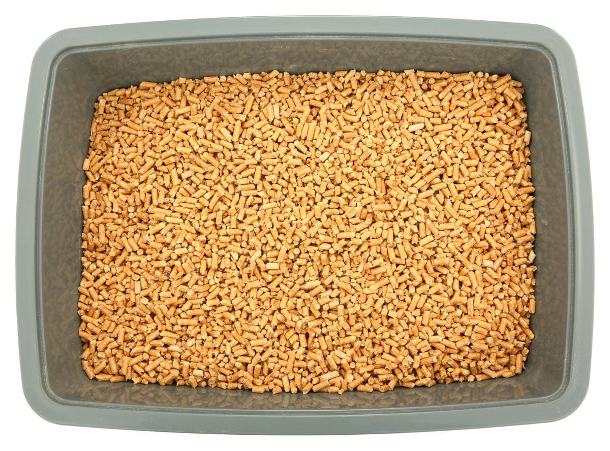 What to look for in a cat litter