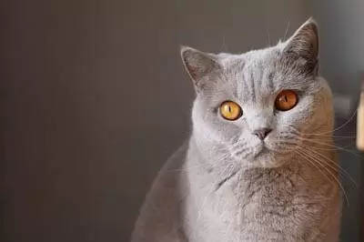 Healthy coat and skin on a cat