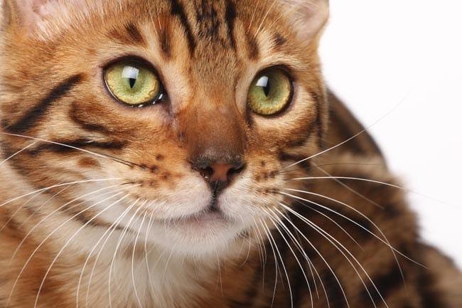 Dementia in cats