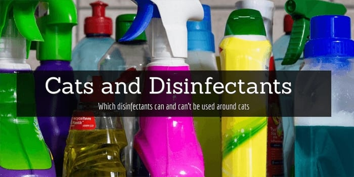 Cats and disinfectants