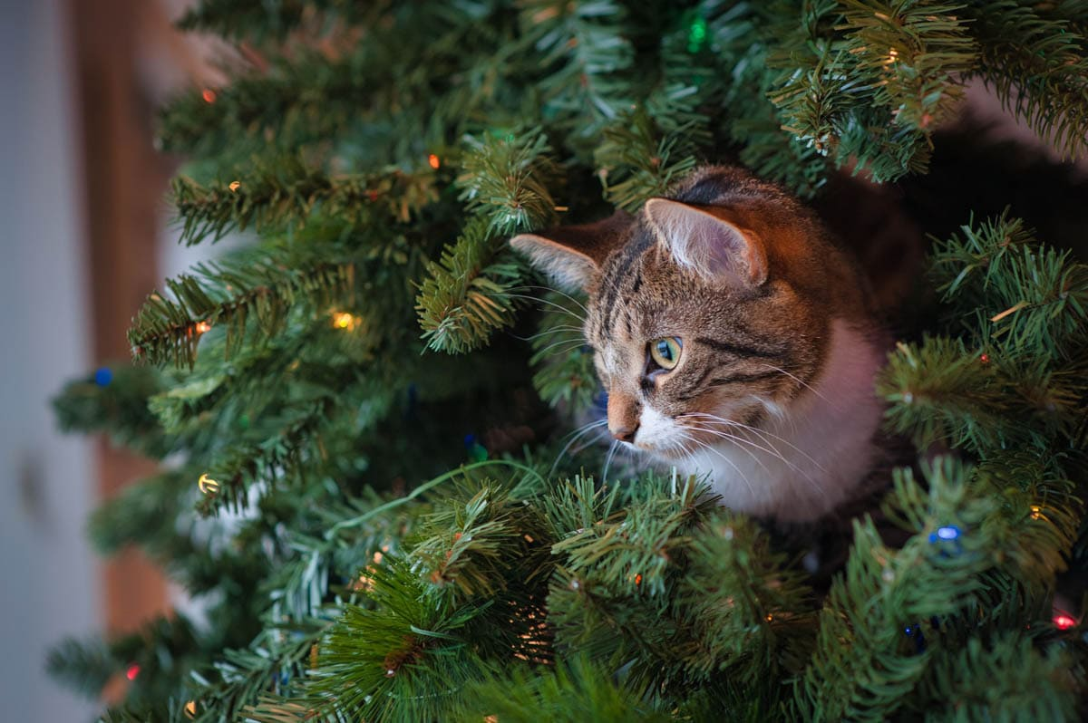 Keeping cats off Christmas trees