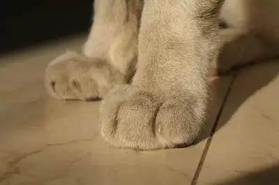 Legs and paws
