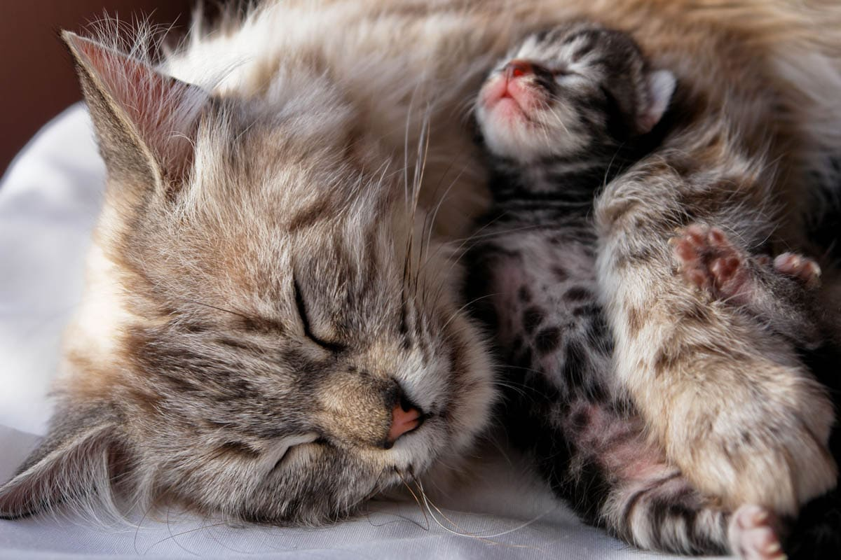 Post natal complications in cats
