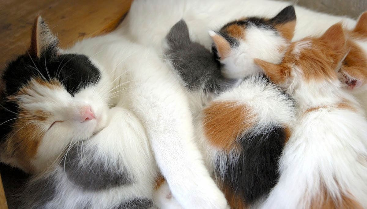 Post natal care for cats