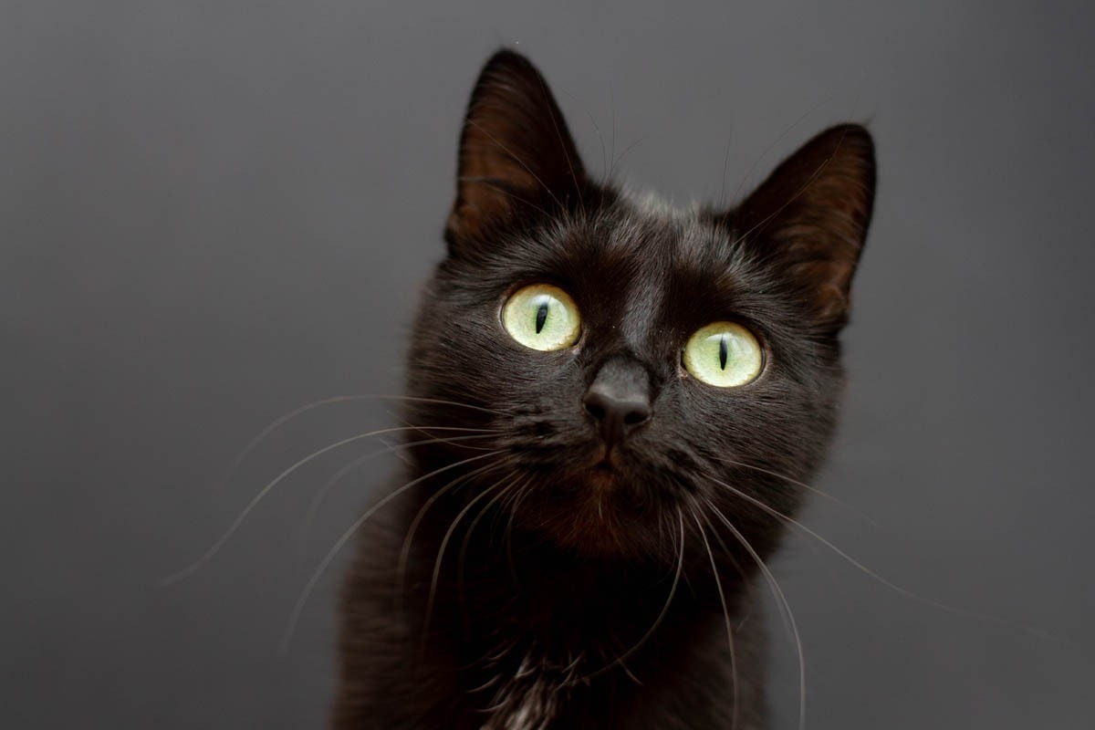 Pulmonary edema in cats