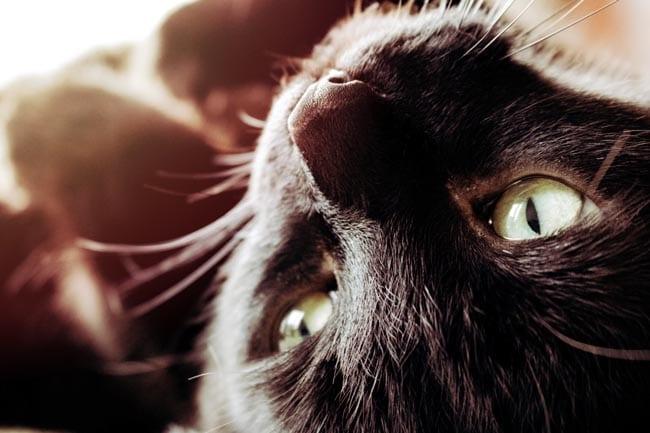 Senior cat