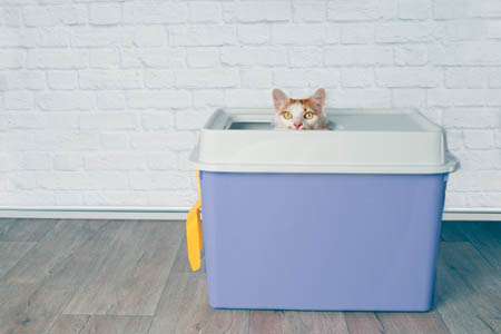 Top entry litter tray