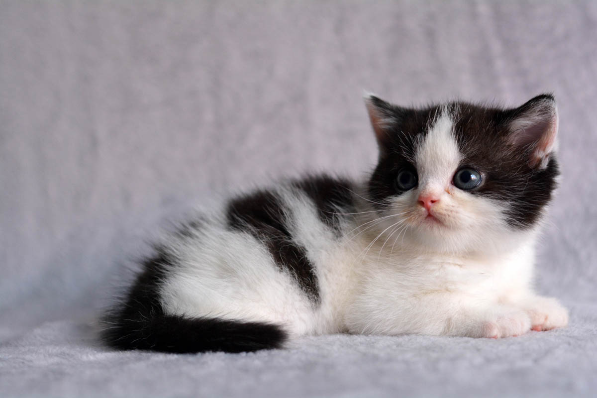 Where to buy a kitten or cat