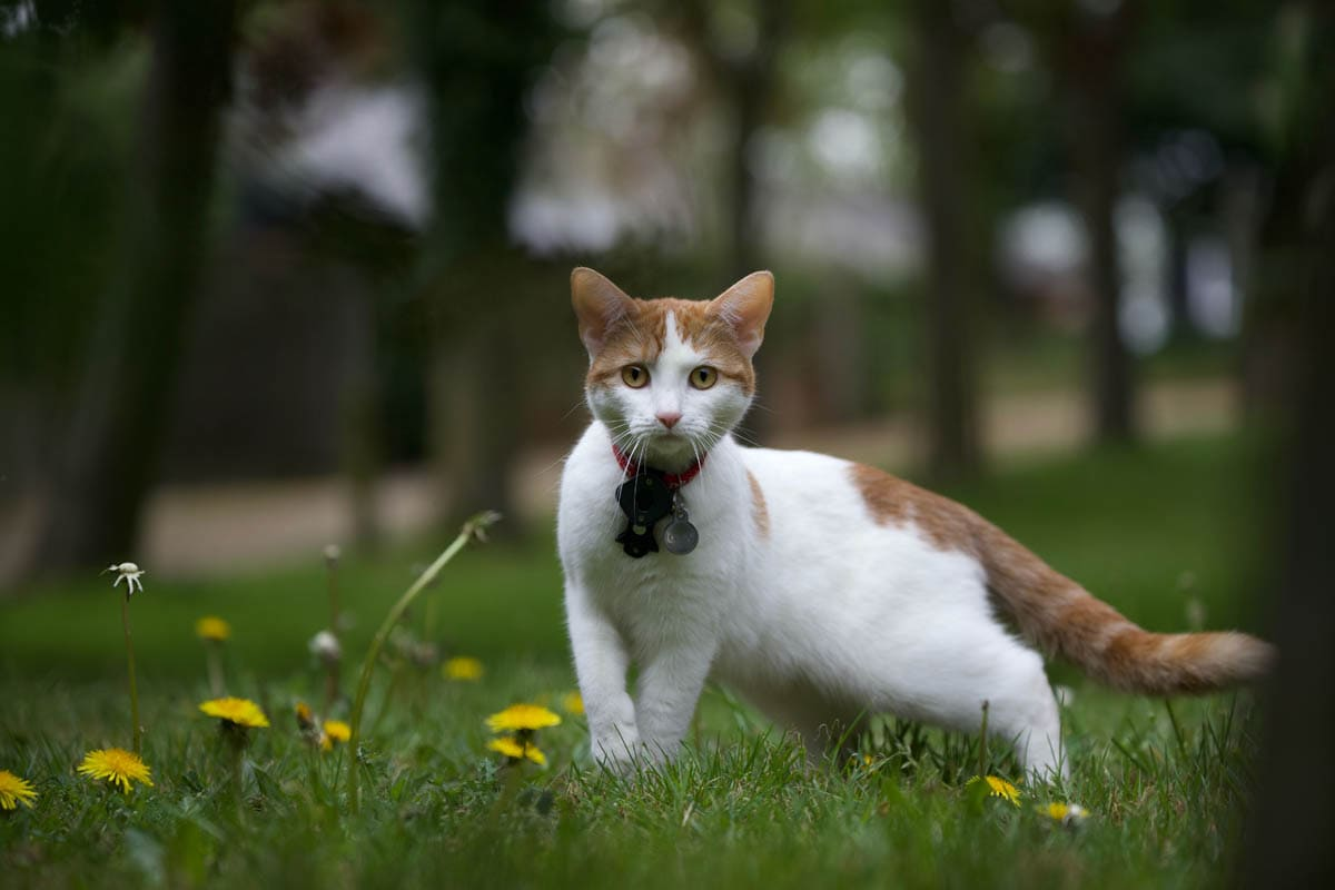 Allergies in cats