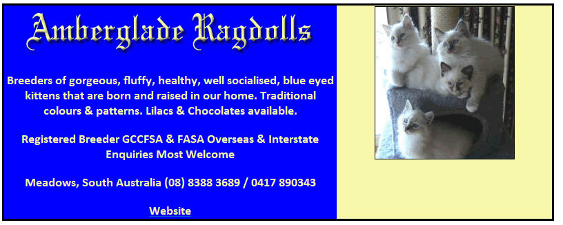 Amberglade Ragdolls