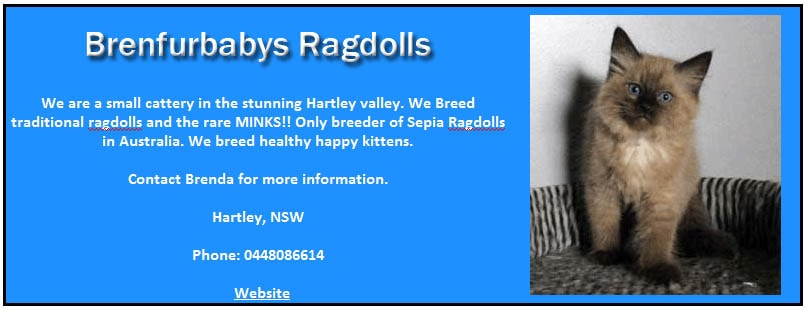 Brenfurbabies Ragdolls