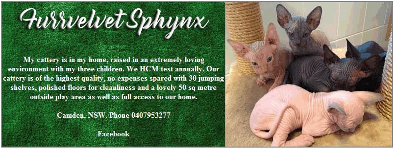 Furrvelvet Sphynx