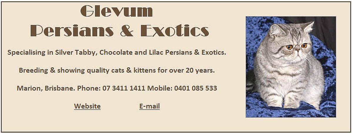 Glevum Persians and Exotics