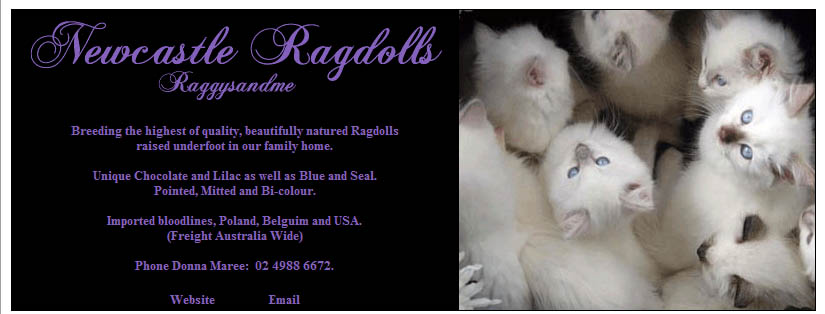 Newcastle Ragdolls