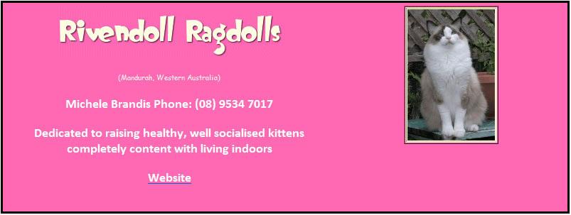 Rivendolls Ragdolls