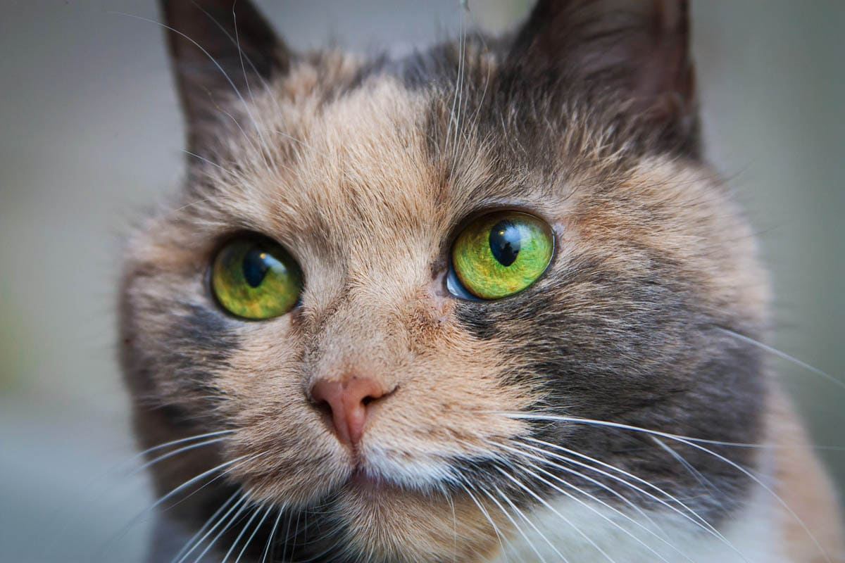 Skin infection in cats