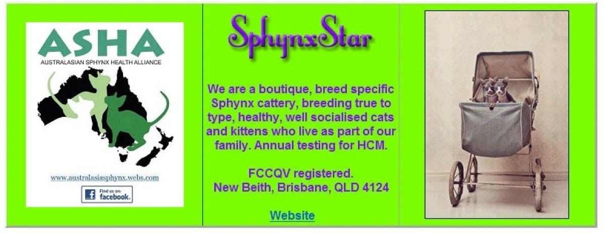 Sphynx Star Cattery