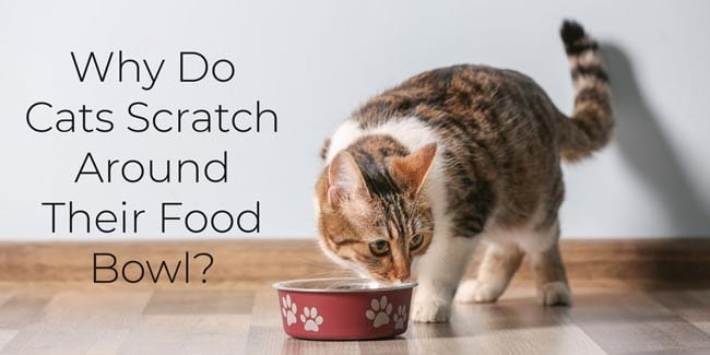 Why do cats scratch around their food bowl?