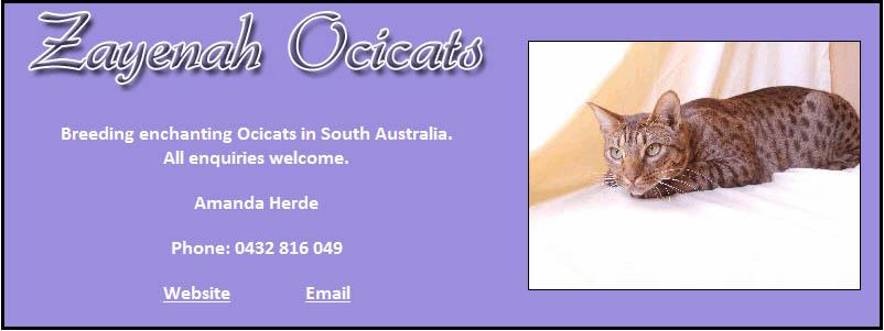 Ocicat Cat Breeders in Australia 1
