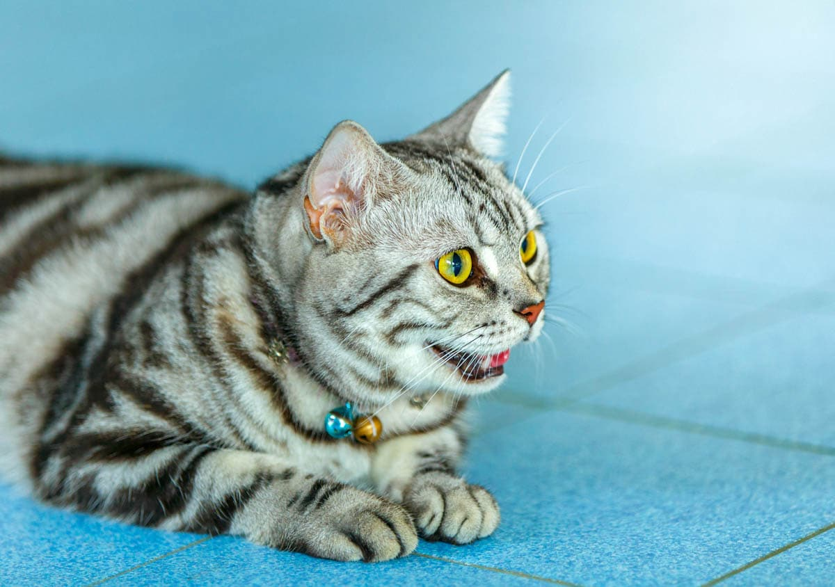 Behaviour changes in cats and what they mean