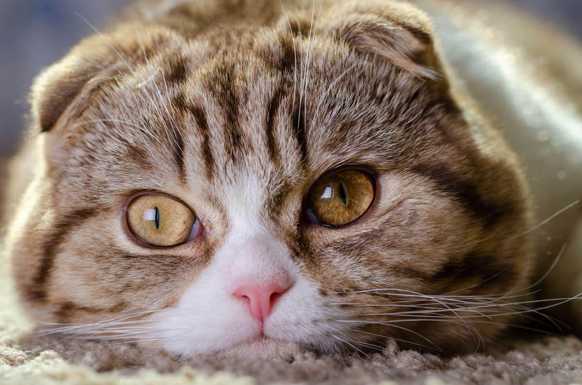 Cat emergencies that can't wait