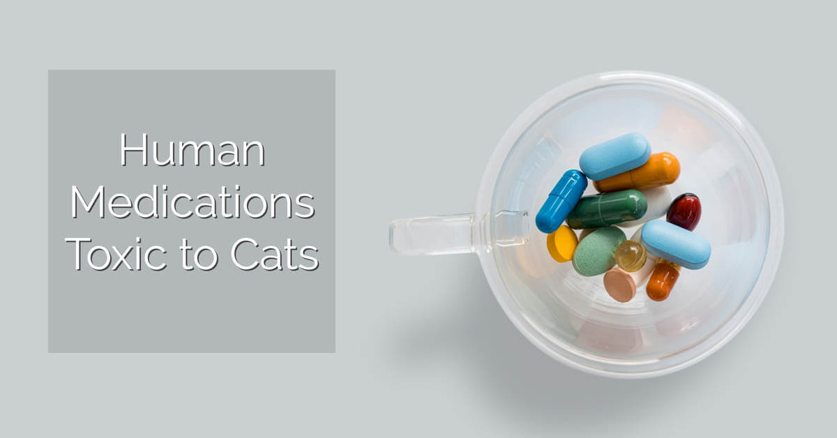 Human medications toxic to cats?