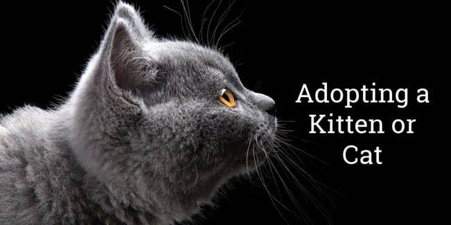 Adopting a kitten or cat