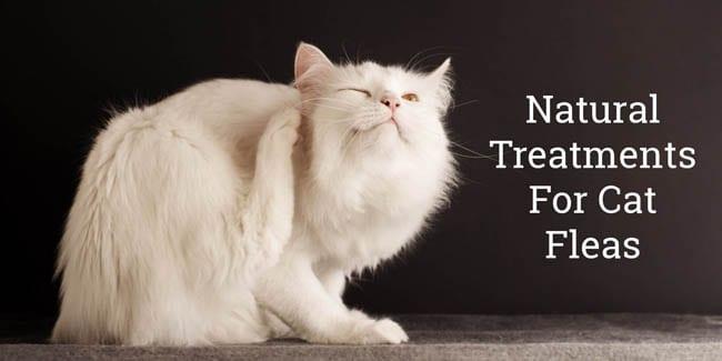 Natural flea treatments for cats