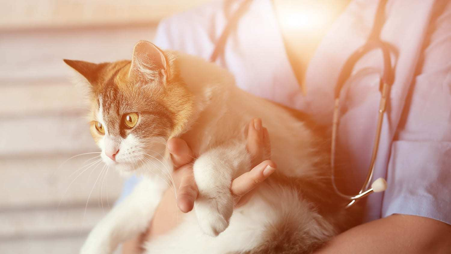 Cat health examination, what to expect