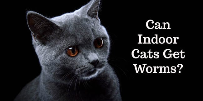 Can indoor cats get worms?