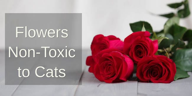 Flowers non-toxic to cats