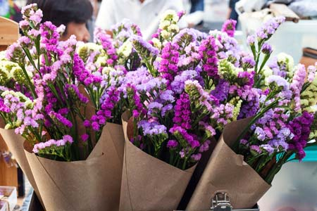 Cat Safe Flowers: Flowers Which Are Non-Toxic to Cats 1