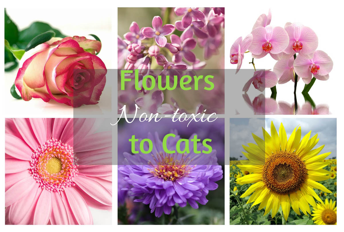 What flowers are non-toxic to cats