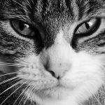 Chronic (Long-Term) Vomiting in Cats