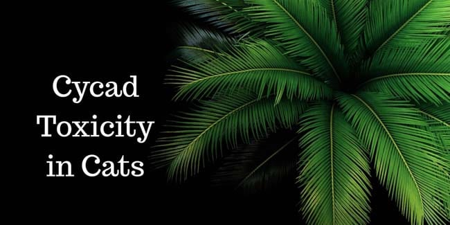 Cycad toxicity in cats
