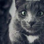 Inflammation of the Esophagus in Cats