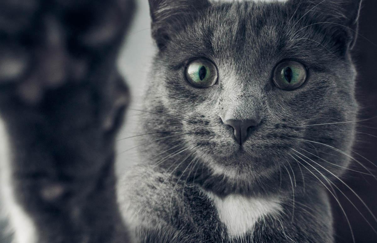 Esophagitis in cats