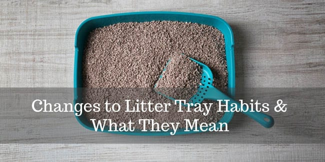 Changes to litter tray habits and what they mean