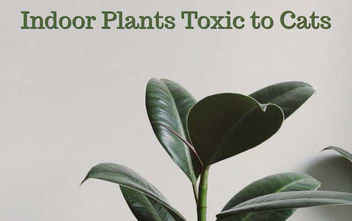 Common House (Indoor) Plants Toxic To Cats