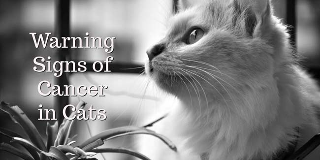 10 Warning Signs of Cancer in Cats