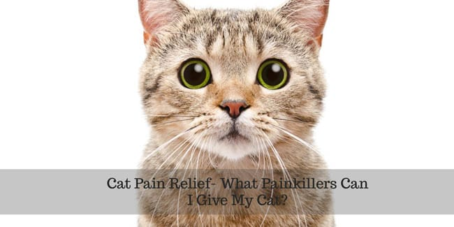 What painkillers can I give my cat?