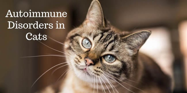 Autoimmune disorders in cats