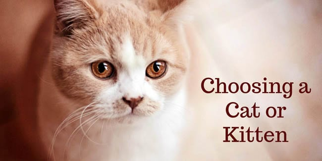 Choosing a cat or kitten