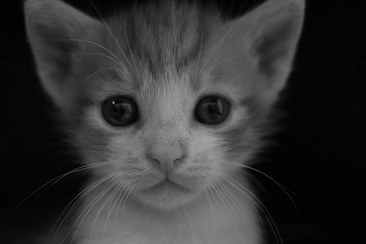 Choosing a cat or kitten