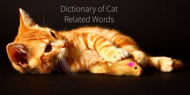 Dictionary of cat-related words