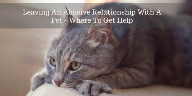 Leaving An Abusive Relationship With a Pet 3