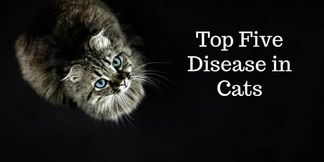 Top five diseases in cats