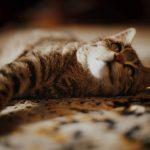 Antihistamine Dosage Chart For Cats